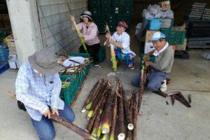 マダケの皮むきをする農家と体験農園参加者