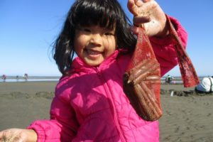 行橋の海岸でマテ貝掘りを楽しむ子ども