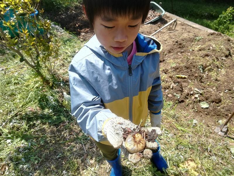 カブトムシの幼虫を畑で見つけた男の子