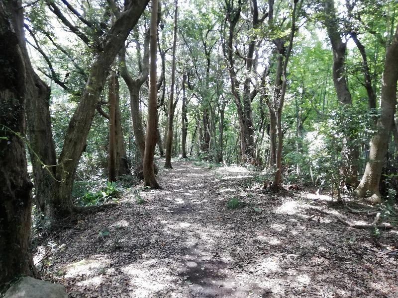 クヌギの木がある雑木林のイメージ