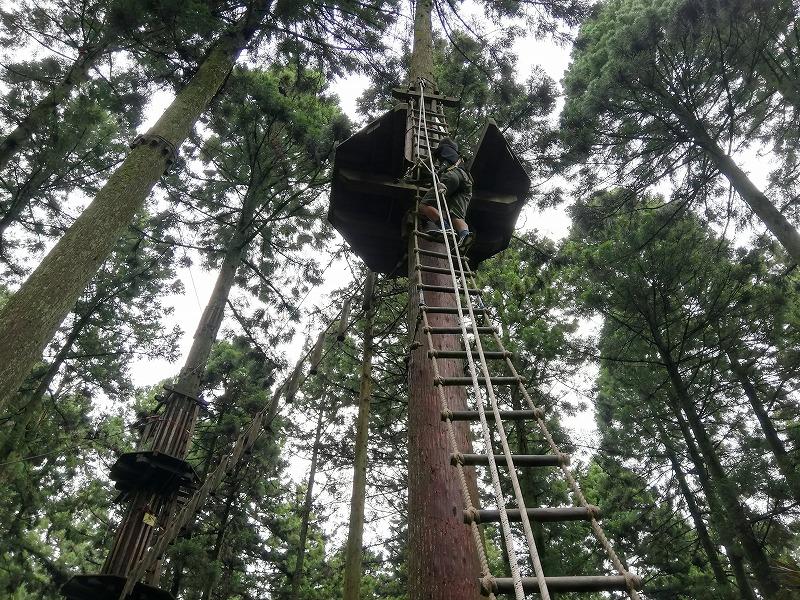 フォレストアドベンチャーのアドベンチャーコースで木に登る様子