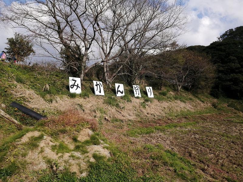 道路から見える「みかん狩り」の看板